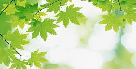 Eminence organics anti,aging,starter,set,holiday,gift,set,lemon,cleanser,eight,greens,organic,youth,serum,age-defying,travel, set, eminence, organic